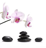 Stack of stones and orchid Royalty Free Stock Photography