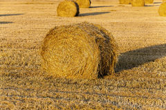 Stack of straw Stock Image