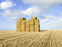 Stack of straw bales in field. Large stack of straw bales in field after harvesting Stock Images