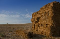 Stack of straw bales in the harvested field royalty free stock images