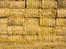 Stack of straw bales Stock Image