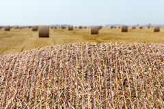 Stack of straw in the field Royalty Free Stock Image