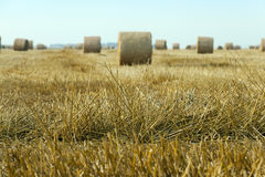 Stack of straw in the field Royalty Free Stock Photo
