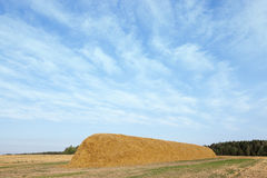 Stack of straw in the field Stock Image