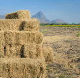 Stack of straw hay bales Stock Photography