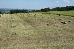 Stack of straw on the mown field beneath a blue sky Stock Photography