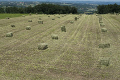 Stack of straw on the mown field beneath a blue sky Stock Image