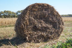 Stack of straw round shape is on the field. Stock Image