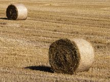 Stack of straw. Several stacks of wheat on the field, landscape royalty free stock image