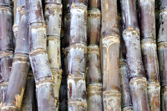 Stack of sugar cane Royalty Free Stock Images