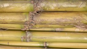 A stack of sugar cane exposing the texture of the stem.  Royalty Free Stock Photography