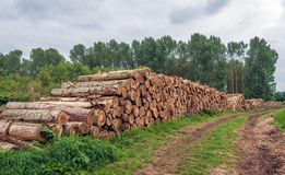Stack of thick tree trunks at the edge of a the forest royalty free stock photos