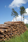 Stack of Timber Logs at Summer. A pile of timber logs (eg. pine and birch) for biomass on a beautiful setting at the edge of forest on a sunny day in June Royalty Free Stock Images