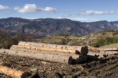 Stack of timber in a mud on a hill Stock Photography
