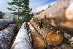 Stack of timber Royalty Free Stock Images