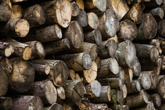 Stack of Tree Logs Royalty Free Stock Photos