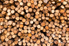 Stack of tree stump Royalty Free Stock Photo