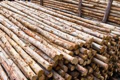 Stack of tree stump Royalty Free Stock Photos