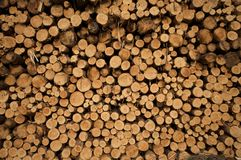 Stack of Tree Trunks. Cut pine tree logs piled up in a stack Stock Image