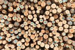 Stack of tree trunks as background texture Royalty Free Stock Image