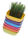 Stack of Vibrant Bowls with Fresh Grass. Stock Images