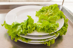 Stack of Waste vegetable dishes. Green lettuce on a plate Stock Image