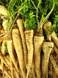 Stack of white carrots Stock Photos