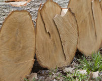 Stack of White Oak Tree Logs Stock Image