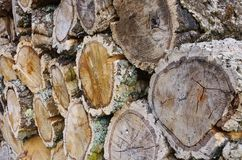 Stack of wood from cork oak Royalty Free Stock Photography