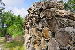 Stack of wood from cork oak Royalty Free Stock Image