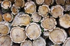 Stack of wood from cork oak Stock Photos