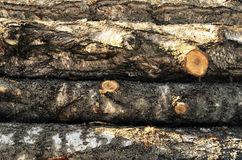 Stack of wood felled birch logs Stock Photos