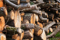 Stack of wood Stock Photography