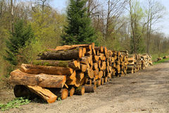 Stack of wood. In the forest Royalty Free Stock Photo