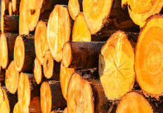 Stack of Wood Royalty Free Stock Image