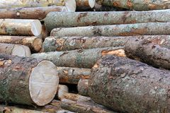 A stack of wood logs in the forest Stock Photos