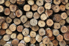 Stack of wood logs Stock Photos