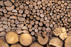 Stack of wood logs Stock Photography