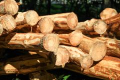 Stack of Wood. Newly felled lumbers are stacked Stock Images