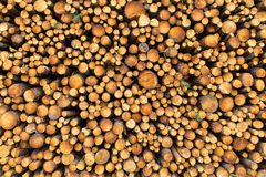 Stack of wood. Newly felled timber. stack of wood stock photos