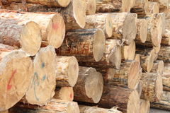 Stack of wood Royalty Free Stock Images