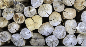 Stack wood of pine Royalty Free Stock Photo