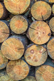 Stack of wood. Stack of pine logs in the village Royalty Free Stock Photo