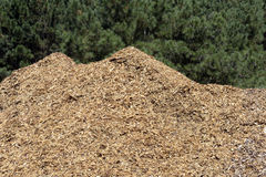 Stack of wood shavings in sawmill Royalty Free Stock Photo