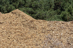 Stack of wood shavings in sawmill Stock Images