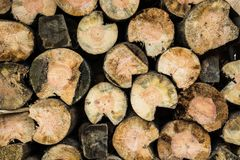 Stack of wood. Or firewood, round trunks Royalty Free Stock Photo