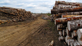 Stack of wooden logs along a rural road Stock Images