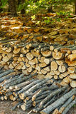 Stack of wooden logs Royalty Free Stock Photos
