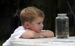 Stacked. Two toads in a jar with a little boy looking on Stock Photo