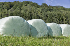 Stacked bales of harvested hay wrapped with plastic film closeup Stock Photo